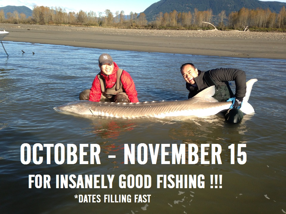 Sturgeon fishing trips packages fraser river canada for Fishing vacation packages