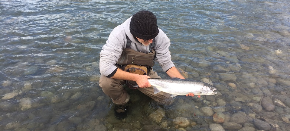 steelhead, steelhead fishing, steelhead report, vedder report, vedder steelhead report, steelhead report vedder river, fishing report vedder