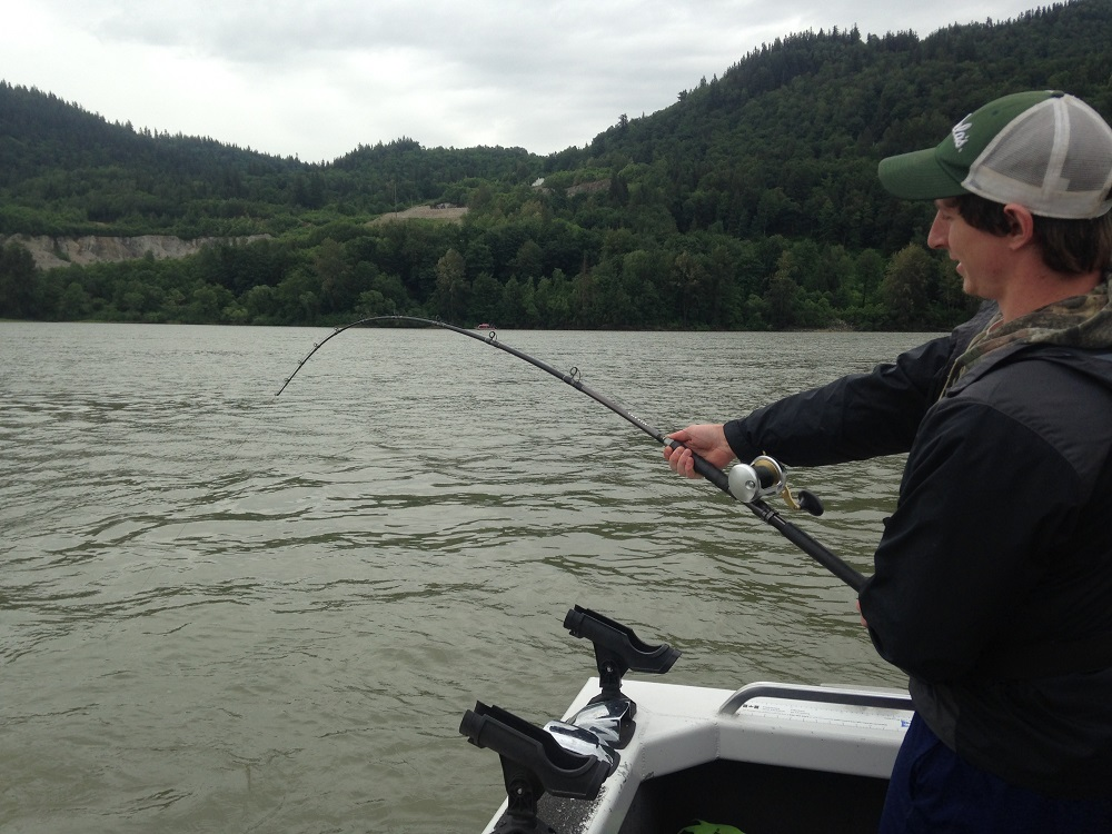 sturgeon fishing, sturgeon fishing bc, sturgeon fishing fraser river
