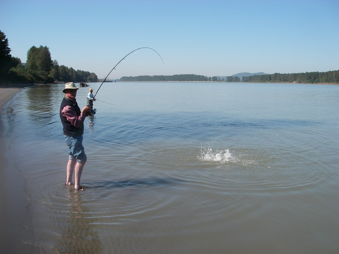 pink salmon fishing, how to catch pink salmon, pink salmon fishing fraser river, salmon fishing