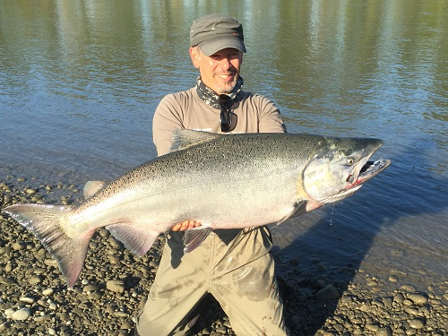 Fraser River Chinook Salmon