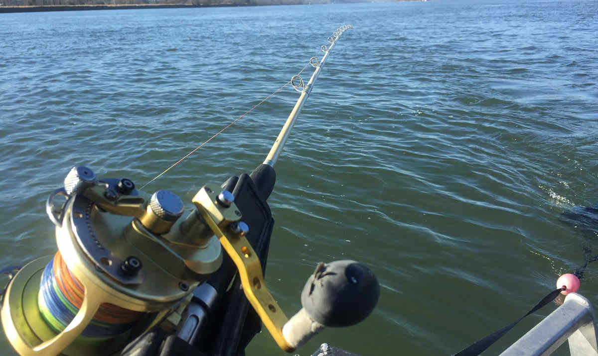 sturgeon fishing, fraser river sturgeon fishing, white sturgeon fishing, sturgeon fishing mission bc, sturgeon fishing canada