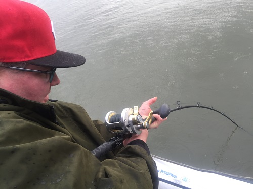 sturgeon fishing, sturgeon fishing guides, fraser river sturgeon fishing, fraser river fishing, sturgeon fishing canada