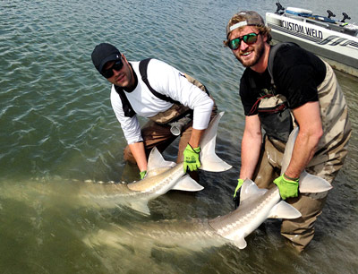 sturgeon, white sturgeon, sturgeon fishing, sturgeon fishing fraser river, sturgeon fishing charters fraser river, sturgeon fishing charters, sturgeon fishing chilliwack, sturgeon fishing mission, sturgeon fishing guides, sturgeon fishing canada, sturgeon guides, sturgeon charters, sturgeon fishing holidays