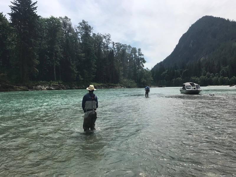 trout fishing vancouver 2020, trout fishing, trout fishing vancouver, trout fly fishing, trout fly fishing vancouver, dolly varden, pitt river fly fishing